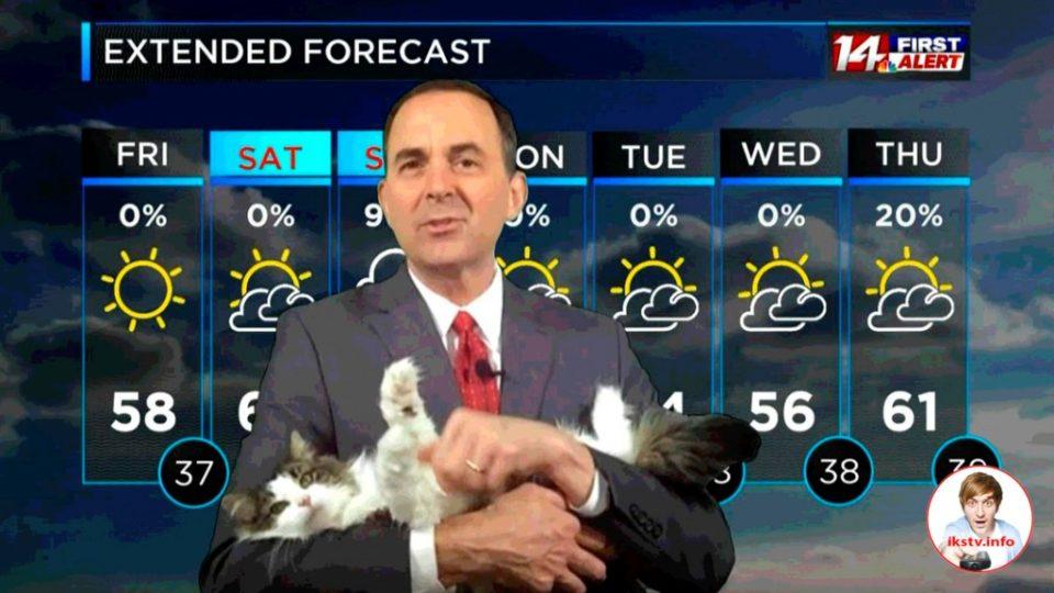 На американском ТВ синоптик даёт прогнозы с кошкой на руках