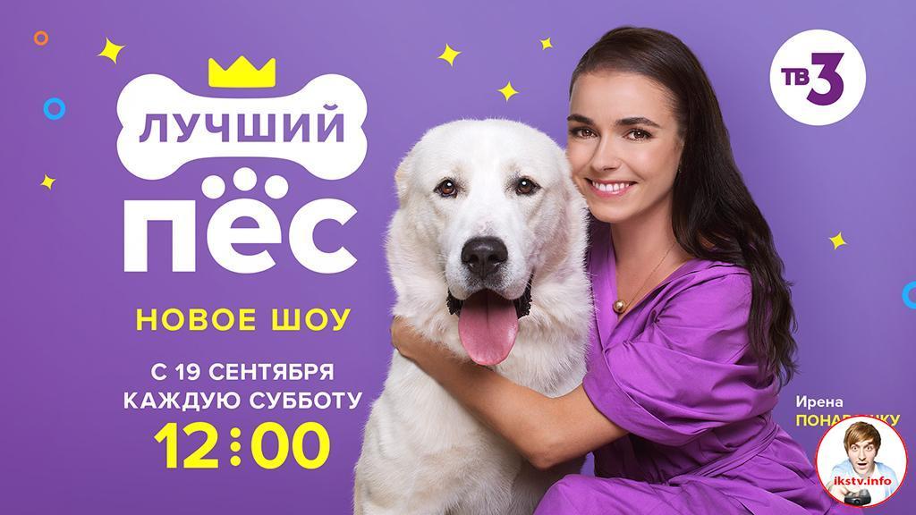 ТВ-3 перевел собак на дистанционное обучение